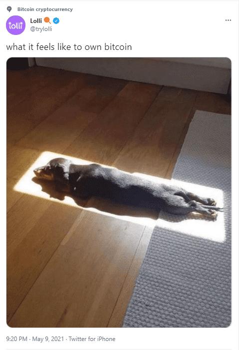 Dog owning btc